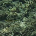 greece-kayaking-pt2 (29)